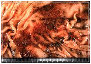 Indiana Animal Disease Diagnostic Laboratory